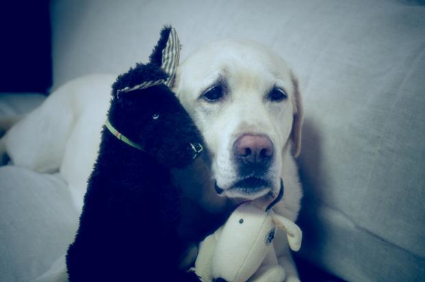 黒犬ちゃんと白犬ちゃんと、どちらも嫌いだったのね?