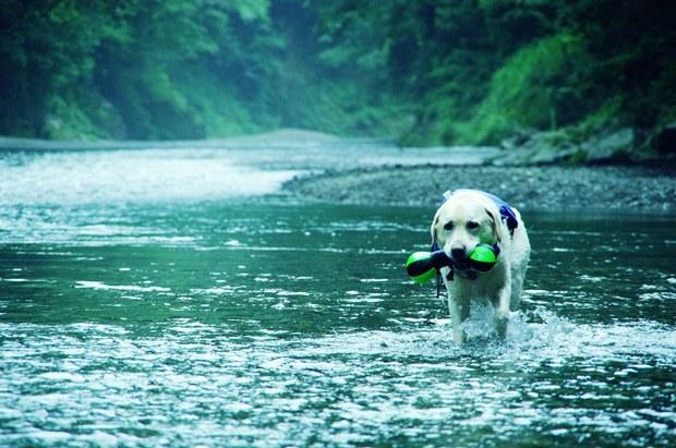 朝一番の川冷たかったね。
