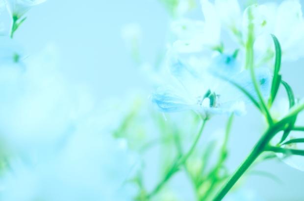 花に隠して