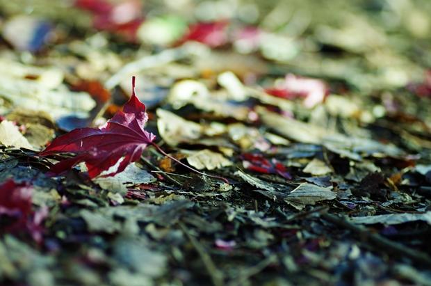 紅葉も落ちて