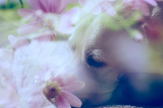 花の香りの中で…