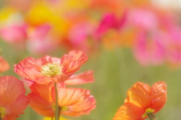 花が揺れる~♪