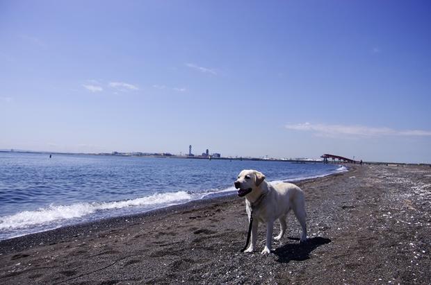 はい、ぱーくん、海ですよー!