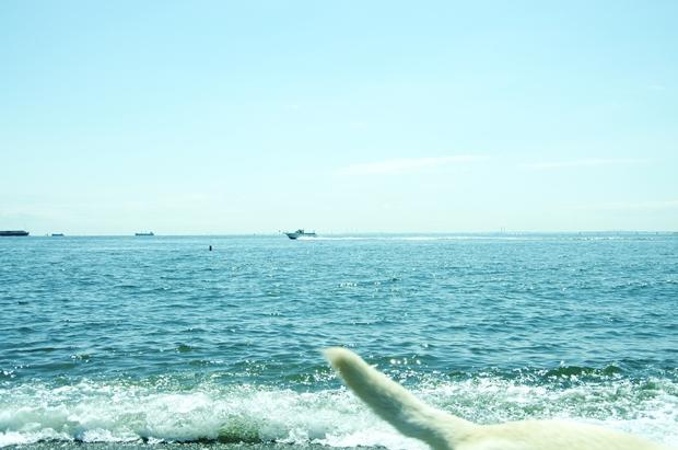 う~ん、飛行機と犬のショットが撮りたーい!