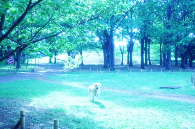 写真撮っているのを待っている犬