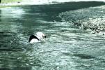 とにかく泳ぎます!