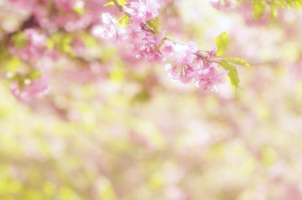 うわっ、桜があってびっくりしましたん♪