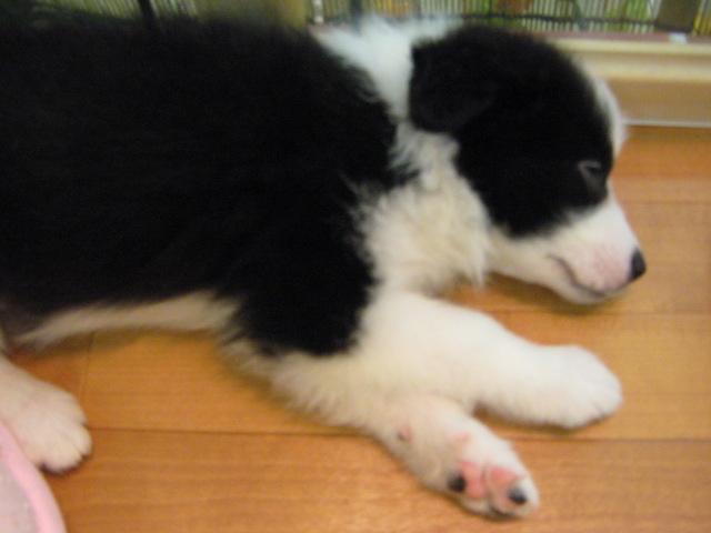 寝てるボーダー
