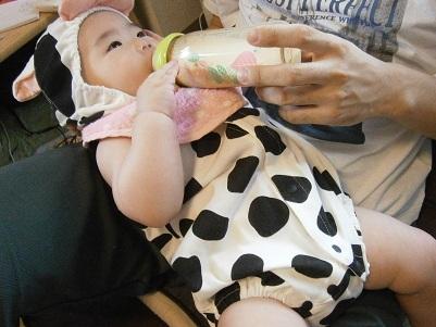 牛、ミルクを飲む。