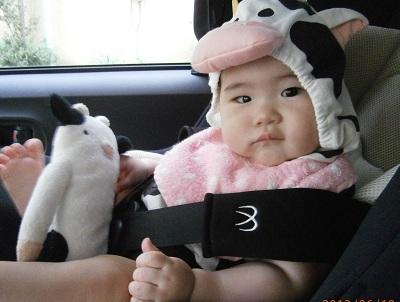 牛、おでかけ。