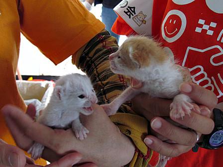 保護された赤ちゃん猫