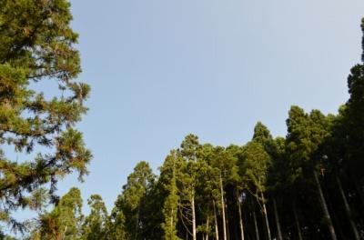 ACN宝島2 (20)s-