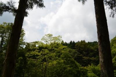 ACN宝島2 (37)s-