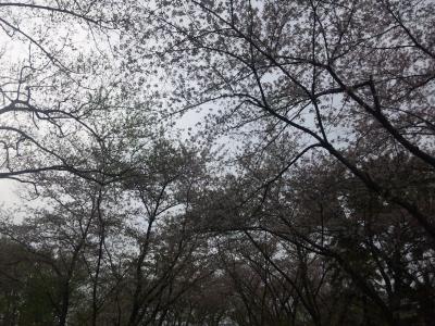秋ヶ瀬公園335