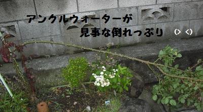 2012-06-20 06.28.34