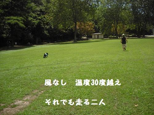 2012-08-01 13.06.09