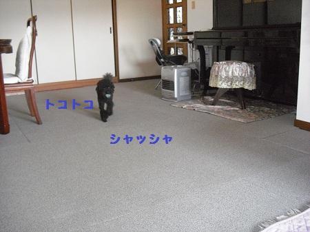 CIMG2878.jpg