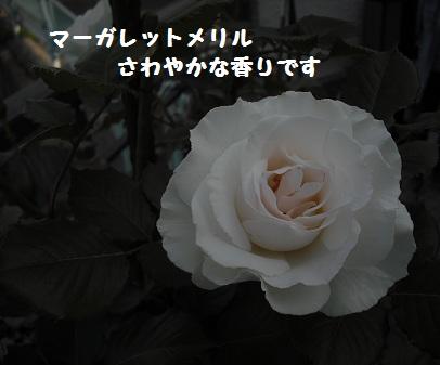 CIMG2914.jpg