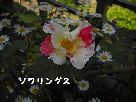 CIMG2919.jpg