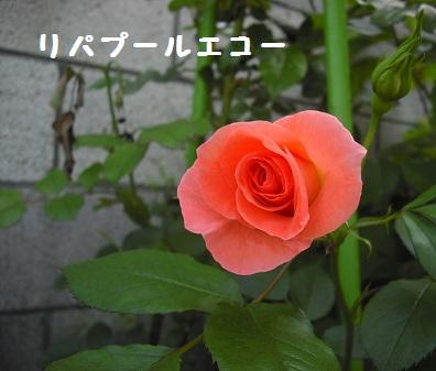 CIMG2921.jpg