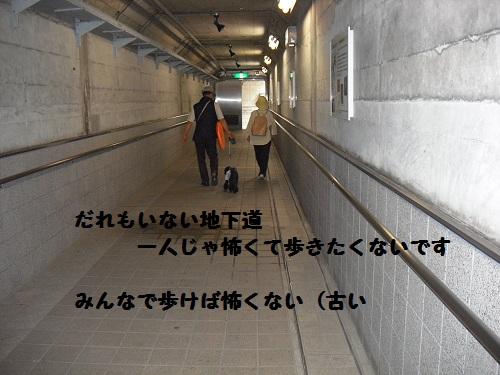 CIMG3429.jpg