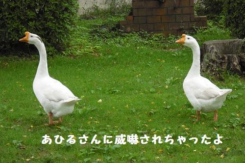CIMG3468.jpg