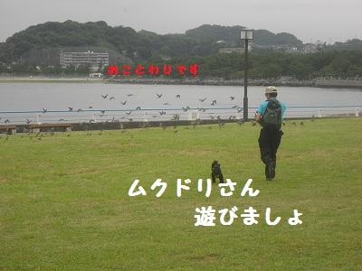 CIMG4341.jpg