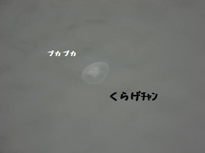 CIMG4370.jpg