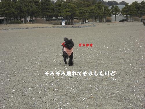 CIMG5961.jpg