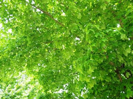 空と緑 (2)