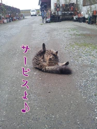 20120310_171120.jpg