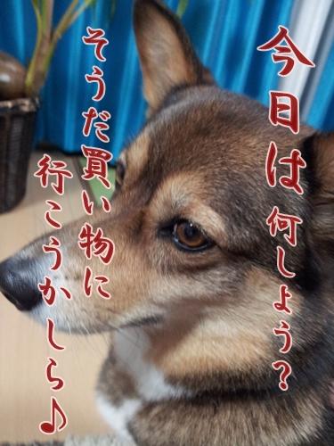 20121013_200345.jpg