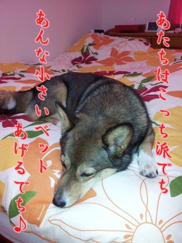 20121014_120444_20121022105645.jpg