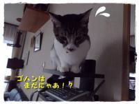 IMGP3616.jpg