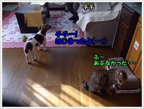 IMGP3754.jpg