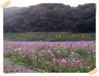 IMGP3792.jpg