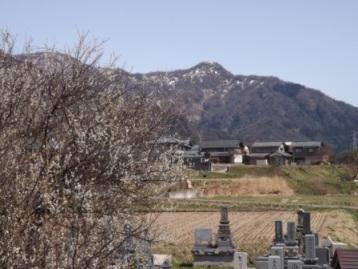 梅花と鷲ヶ岳城