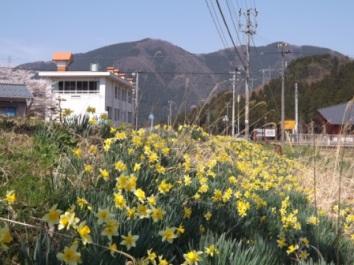 イラカ嵩城と水仙花