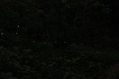 2012.5.30  (5)