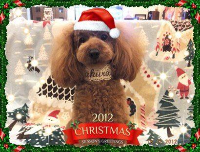 さくらちゃん1歳クリスマス