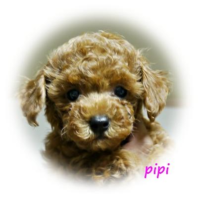 pipi9.jpg