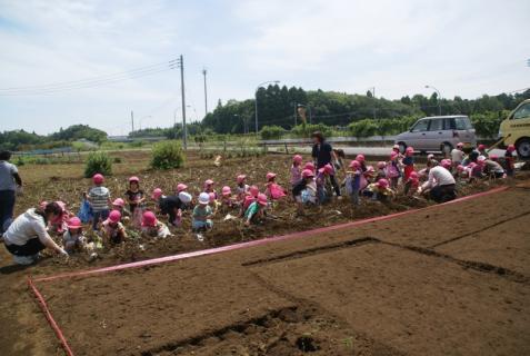 2006-01-26 24年6月27日ジャガイモ掘り 005 (800x536)