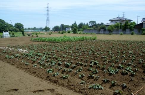 2006-01-26 24年6月27日ジャガイモ掘り 001 (800x536)