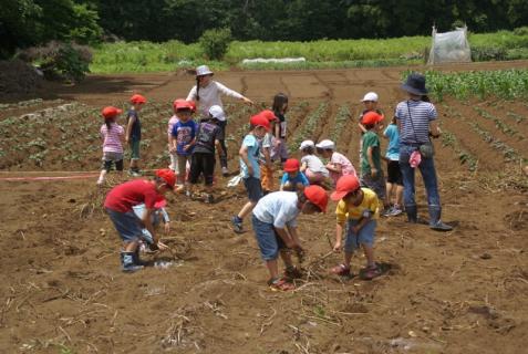 2006-01-26 24年6月27日ジャガイモ掘り 048 (800x536)