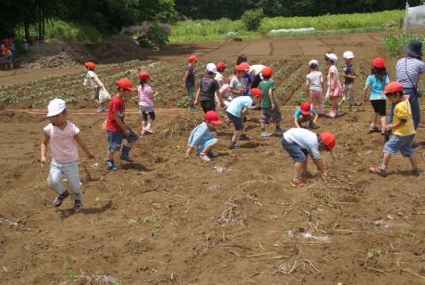 2006-01-26 24年6月27日ジャガイモ掘り 047 (800x536)