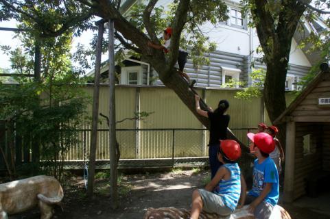 2006-04-06 8月、9月誕生会、園庭風景、ざくろ、銀杏、木登り 077 (800x532) (2)