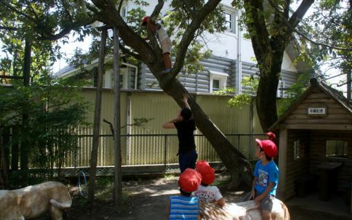 2006-04-06 8月、9月誕生会、園庭風景、ざくろ、銀杏、木登り 085 (800x501)