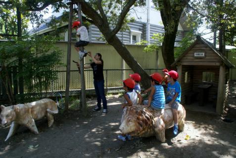 2006-04-06 8月、9月誕生会、園庭風景、ざくろ、銀杏、木登り 083 (800x536)