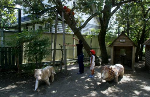 2006-04-06 8月、9月誕生会、園庭風景、ざくろ、銀杏、木登り 087 (800x519)