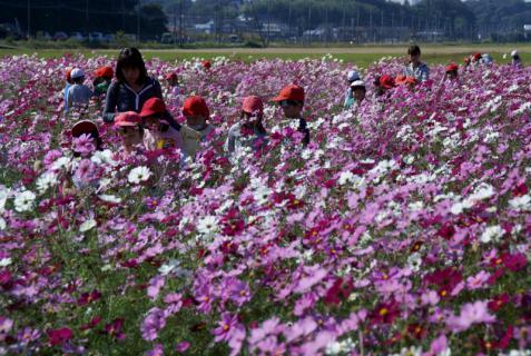 2006-05-27 24年度飯野コスモス畑年長 042 (800x536)